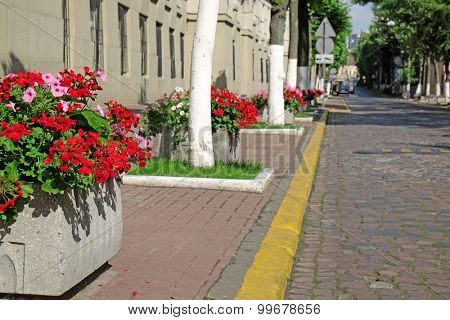 City street with flower beds