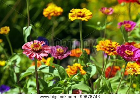 Beautiful flowers bloom in garden