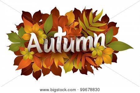 autumn typography with maple leaves
