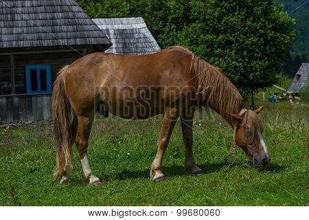 Grazing horses.