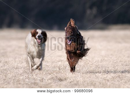 Happy Running Dogs