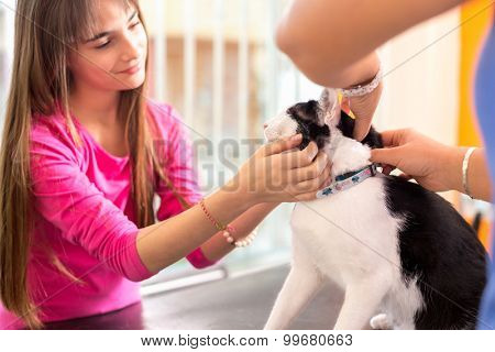 Cute girl with sick cat comforting her pet in vet clinic