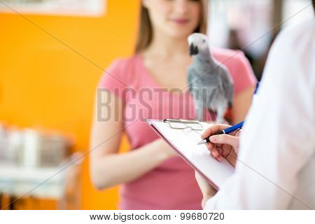 Diagnosing and transcribing therapy to sick parrot in vet infirmary
