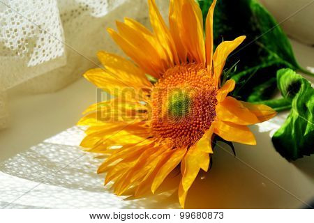 Beautiful bright sunflower on windowsill