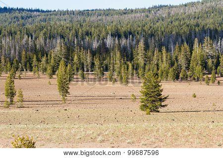 Pumice Desert