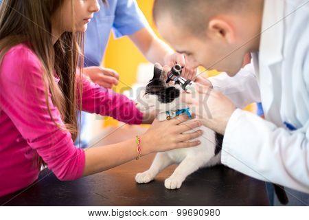 Young veterinarian at work checking cat's ear at vet ambulant