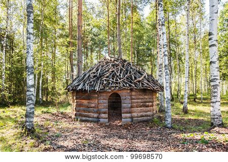 Timber Made Hut In Birch Forest