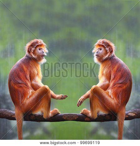 Two monkeys have a fun.