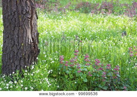 Flowers  In A Forest In Spring
