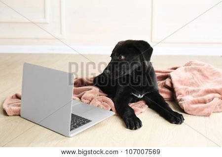 Cute young black Labrador lying near notebook on rosy blanket