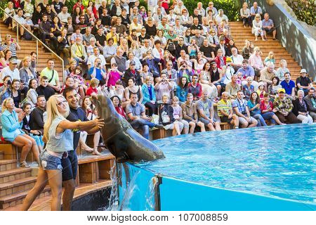 Shows Seals And Sea Lions In The Pool, Loro Parque, Tenerife