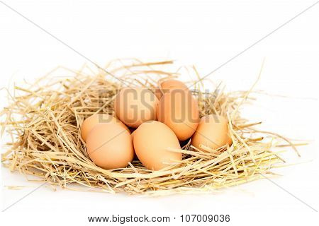 Fresh Eggs On Rice Straw