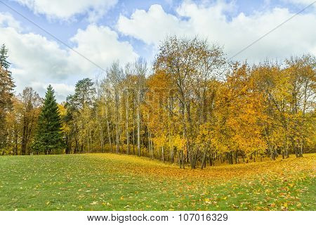 Yellow Leaves On The Field