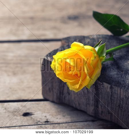 Background with beautiful yellow rose