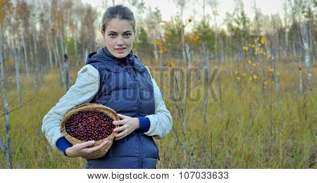 Woman Picking Ripe Cranberies