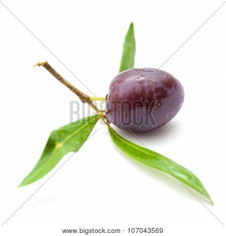 Ripening Olives