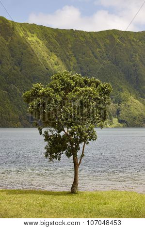 Landscape With Tree, Lake And Mountain In Sao Miguel. Azores