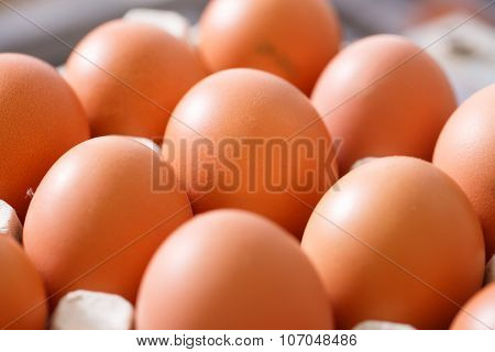 Fresh And Organic Chicken Eggs Packed In Holders