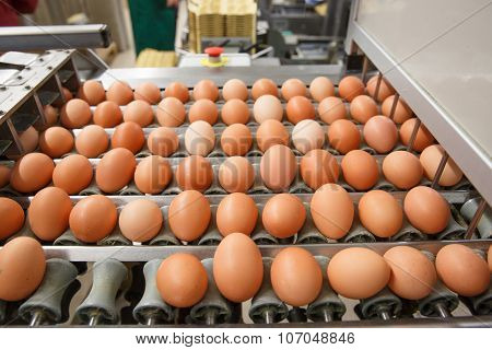 Automated Sorting Of Raw And Fresh Chicken Eggs