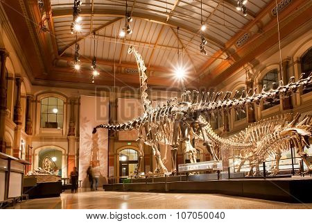 Giant Skeletons Of Brachiosaurus And Diplodocus In Dinosaur Hall