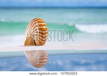 nautilus shell on white sandy beach sand under the sun light, shallow dof