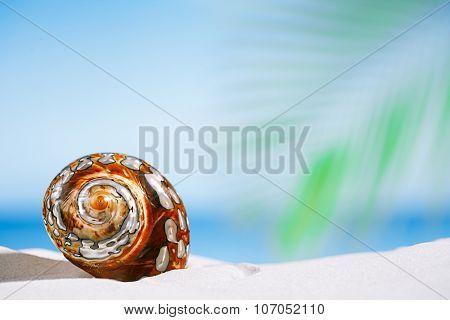 tropical shell on white Florida beach sand under sun light, shallow dof