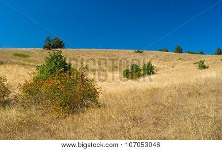 Autumnal landscape with rosa canina shrubs on Ai-Petri mountain tableland in Crimean peninsula