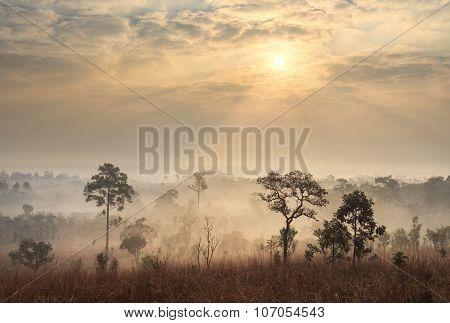 Thailand Savanna Landscape At Sunrise