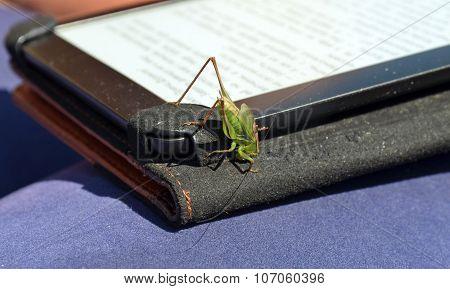 Green Grasshopper Closeup On E-book