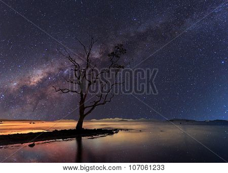The Stand Alone Tree Under Starry Night Clearly With Milky Way