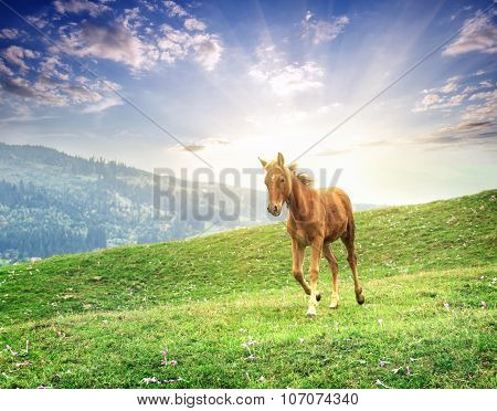 Brown horse galloping across meadow