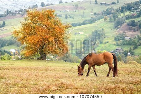 Horse grazing in grass