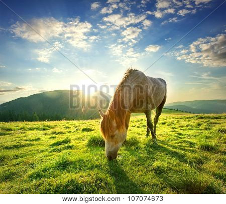 Horse on mountain pasture