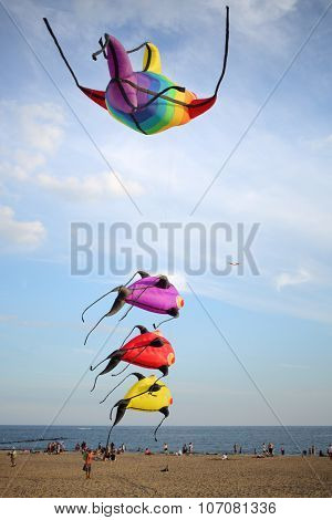 NEW YORK, USA - SEP 08, 2014: People fly kites in the shape of marine animals on the beach in Coney Island