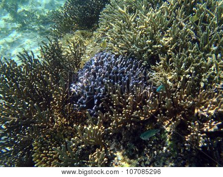 Tropical Coral Reef With Fish In Bali, Indonesia