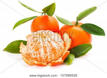 Fresh Organic Tangerine Fruits