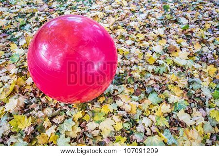 large purple Swiss exercise ball outdoors with maple leaves