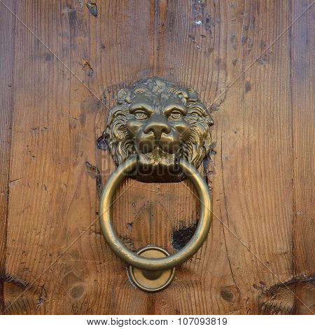 Antique door knob with lion's head on old wooden obsolete door, Rome, Italy