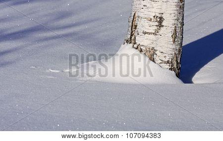 Birch trunk in winter snow.