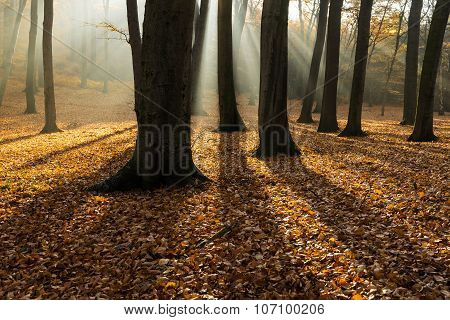 Forest In Autumn With Backlit