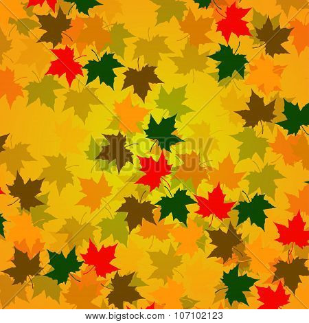Autumn Background Of Maple Leaves