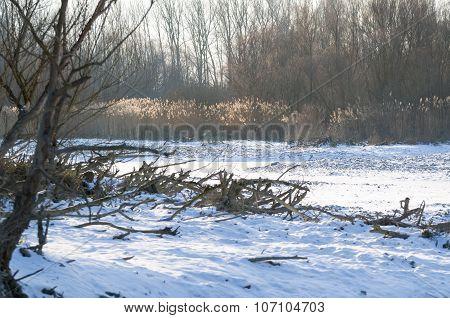 Snowy Winter Danube Backwater Landscape
