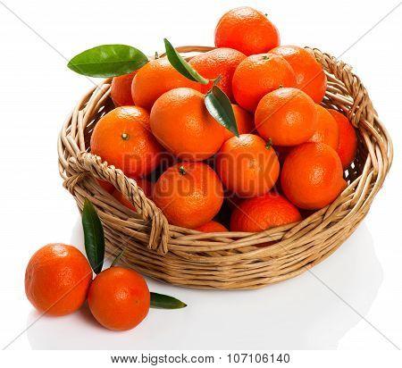 Freshly Plucked Tangerines