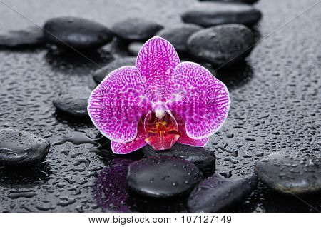 pink flower orchid with black stones on wet background