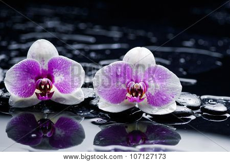 Beautiful white two orchid and therapy stones