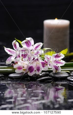 Beautiful orchid with candle and therapy stones