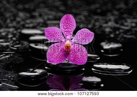 Beautiful pink orchid and therapy stones