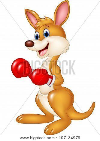 Cartoon kangaroo boxing isolated on white background