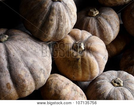 Fresh ripe squash or pumpkins