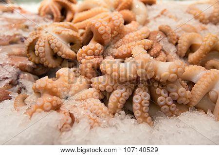 Octopus On The Sydney Fish Market.